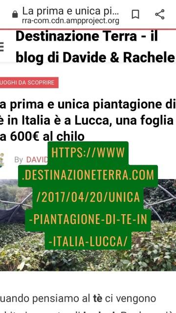 https://www.destinazioneterra.com/2017/04/20/unica-piantagione-di-te-in-italia-lucca/